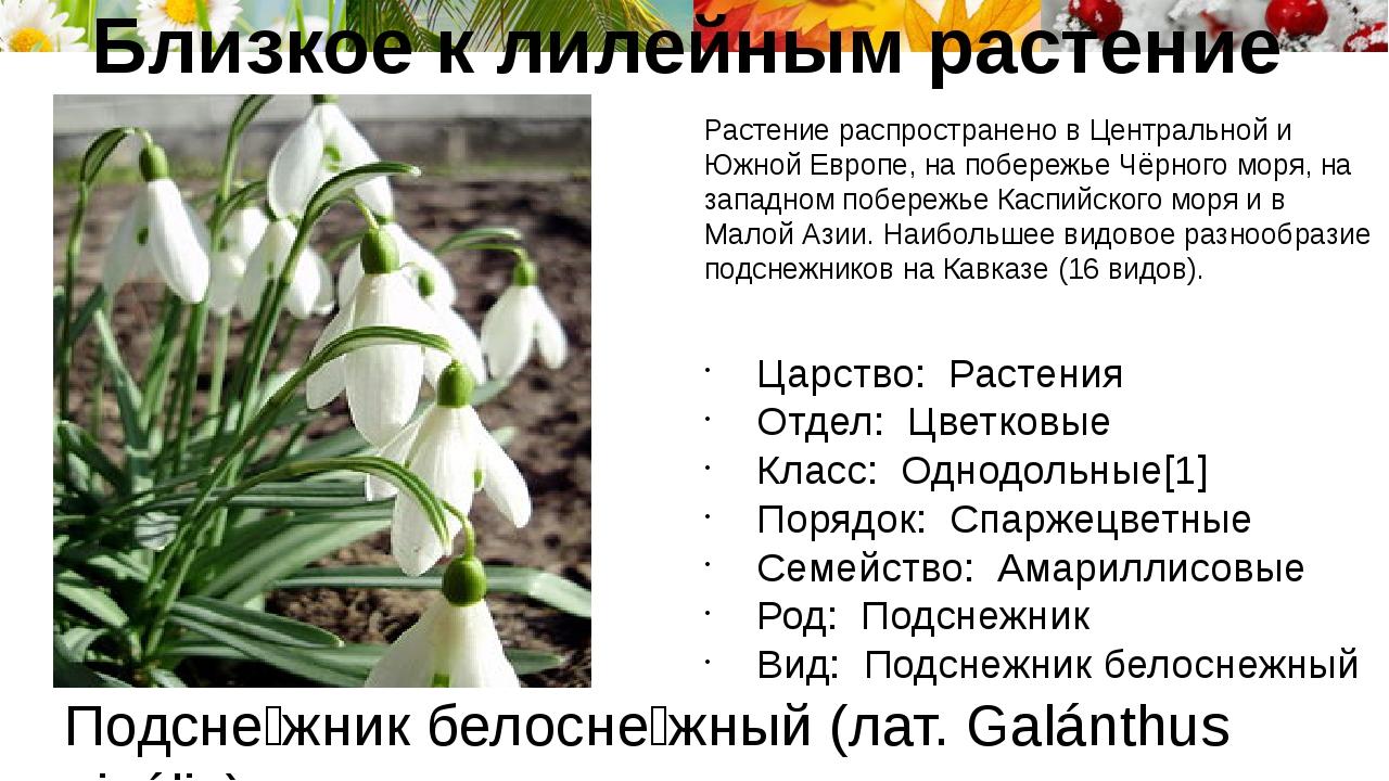 Подсне́жник белосне́жный (лат. Galánthus nivális) Растение распространено в Ц...