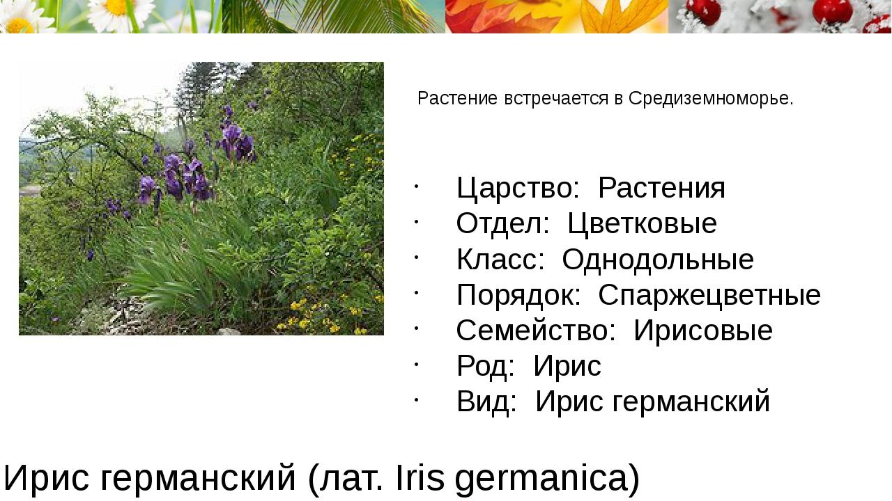 Ирис германский (лат. Iris germanica) Растение встречается в Средиземноморье....