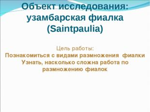Объект исследования: узамбарская фиалка (Saintpaulia) Цель работы: Познакомит