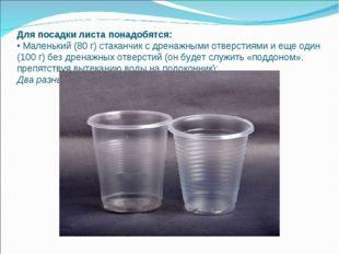 Для посадки листа понадобятся: • Маленький (80 г) стаканчик с дренажными отве