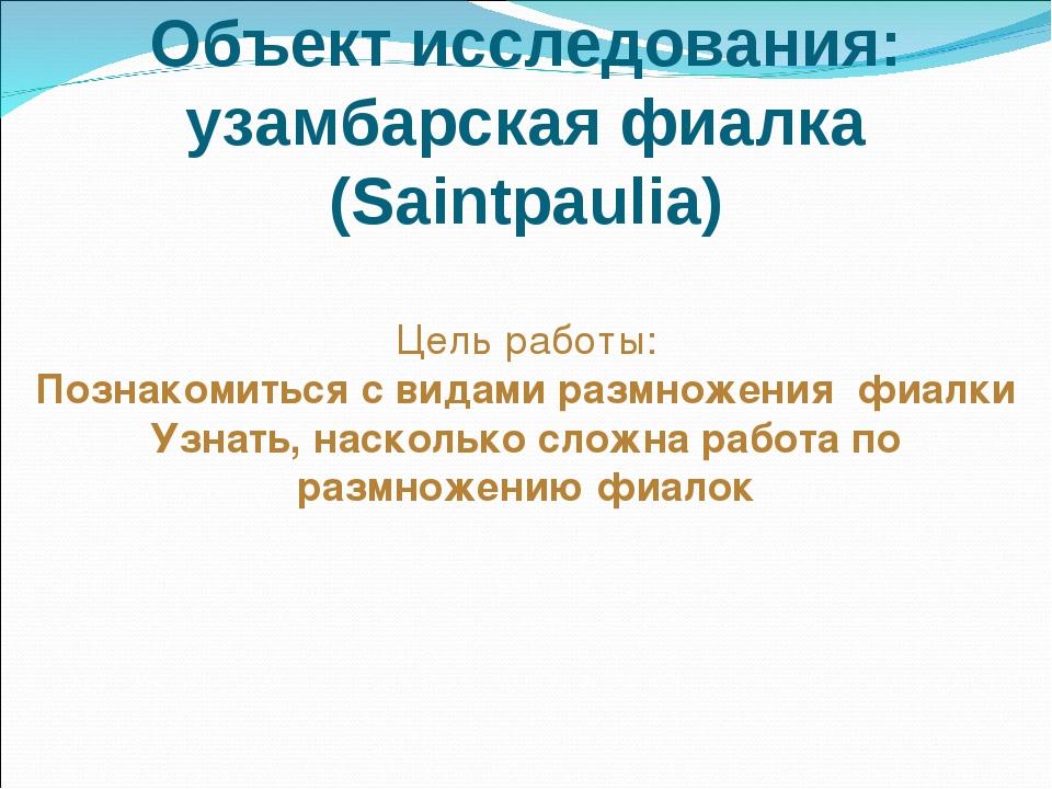 Объект исследования: узамбарская фиалка (Saintpaulia) Цель работы: Познакомит...