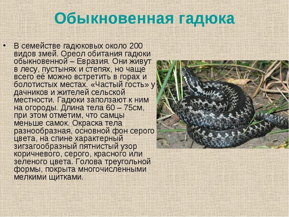 гадюка фото и описание где водится метелей злых