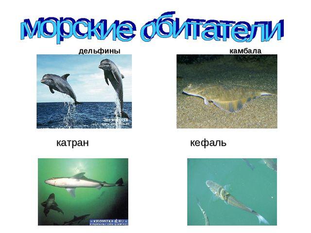 дельфины камбала катран кефаль