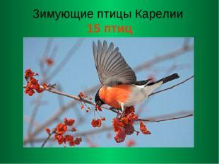 Зимующие птицы Карелии 15 птиц