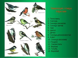 Зимующие птицы Карелии 1. Поползень 2. Снегирь 3. Синица хохлатая 4. Синица