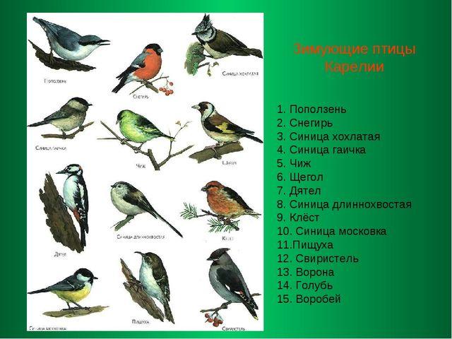 Зимующие птицы Карелии 1. Поползень 2. Снегирь 3. Синица хохлатая 4. Синица...