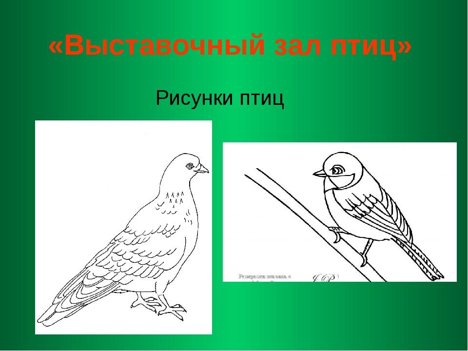 «Выставочный зал птиц» Рисунки птиц