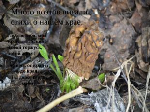 Много поэтов писали стихи о нашем крае. Люблю тебя, мой край алтайский! Тобо
