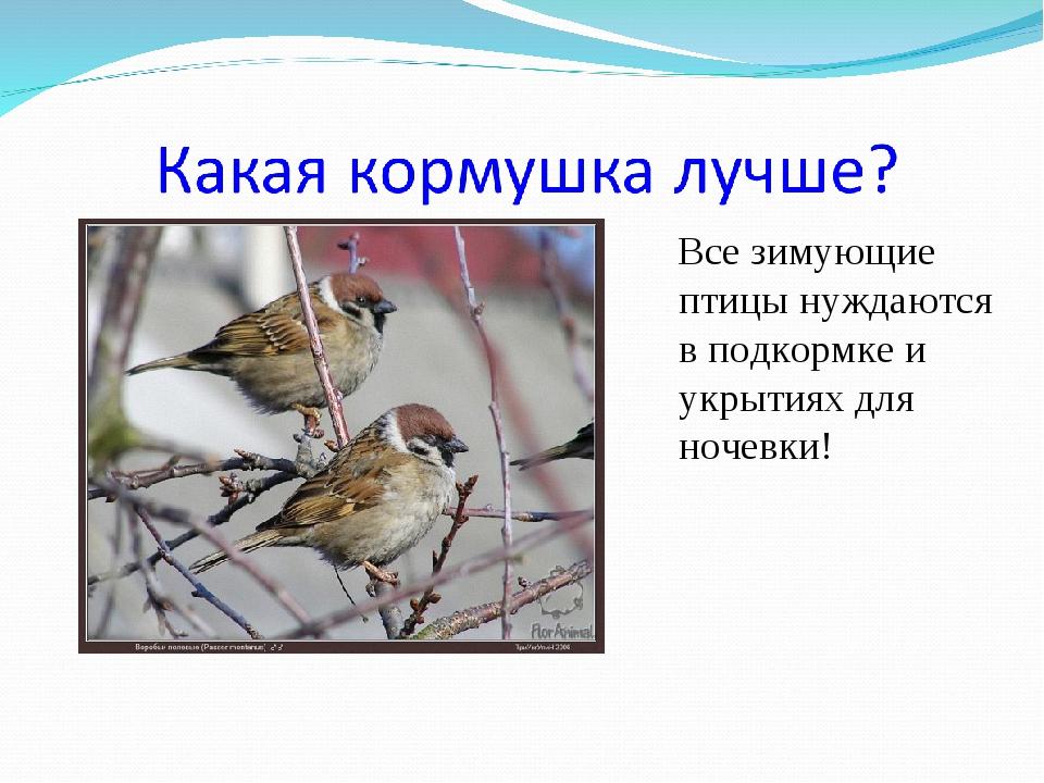 Все зимующие птицы нуждаются в подкормке и укрытиях для ночевки!