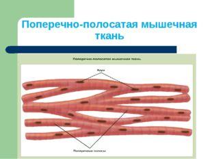 Поперечно-полосатая мышечная ткань