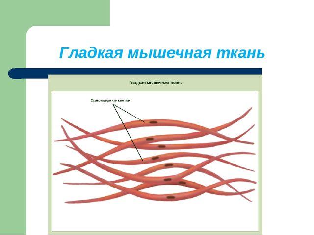 Гладкая мышечная ткань
