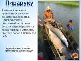 Амазонка является крупнейшим районом речного рыболовства. Видовой состав обит