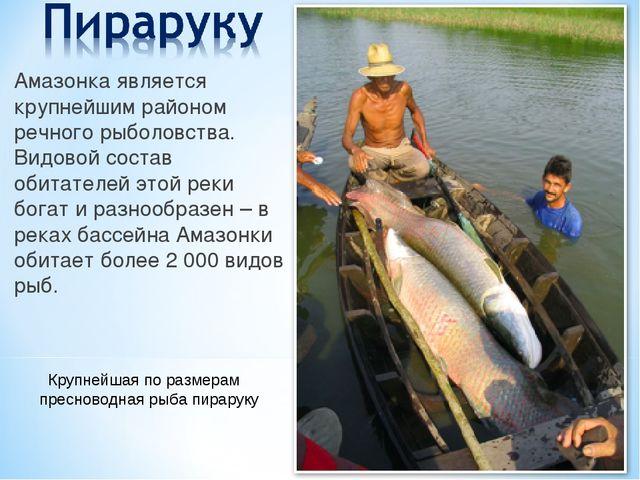 Амазонка является крупнейшим районом речного рыболовства. Видовой состав обит...
