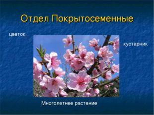 Отдел Покрытосеменные цветок Многолетнее растение кустарник