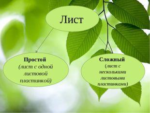 Лист Простой (лист с одной листовой пластинкой) Сложный (лист с несколькими л