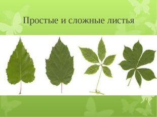 Простые и сложные листья