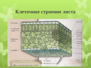 Клеточное строение листа