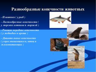 - Плавники ( у рыб ) - Ластообразные конечности ( у морских котиков и моржей