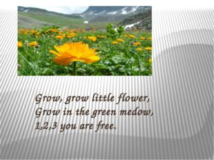Grow, grow little flower, Grow in the green medow, 1,2,3 you are free.