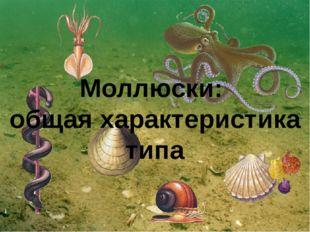 Моллюски: общая характеристика типа