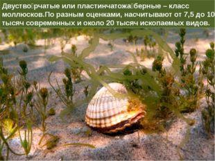 Двуство́рчатые или пластинчатожа́берные – класс моллюсков.По разным оценками