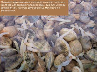 Поскольку двустворчатые моллюски получают питание и кислород для дыхания тол