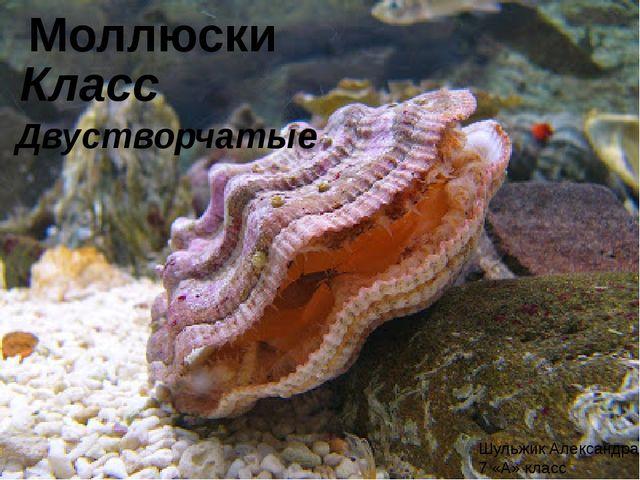 Моллюски Класс Двустворчатые Шульжик Александра 7 «А» класс