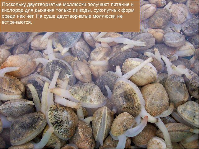 Поскольку двустворчатые моллюски получают питание и кислород для дыхания тол...