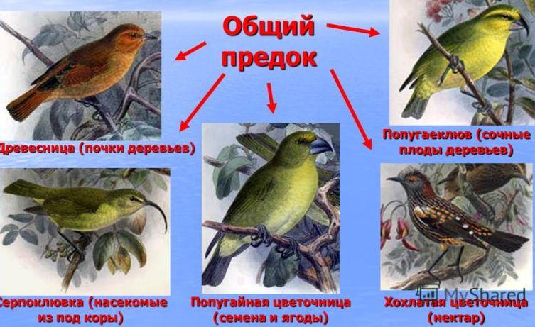 hello_html_73b8149c.jpg