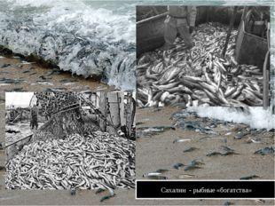 Сахалин - рыбные «богатства»
