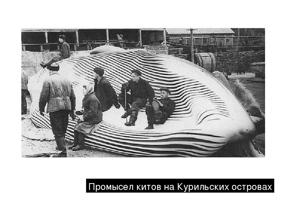 Промысел китов на Курильских островах