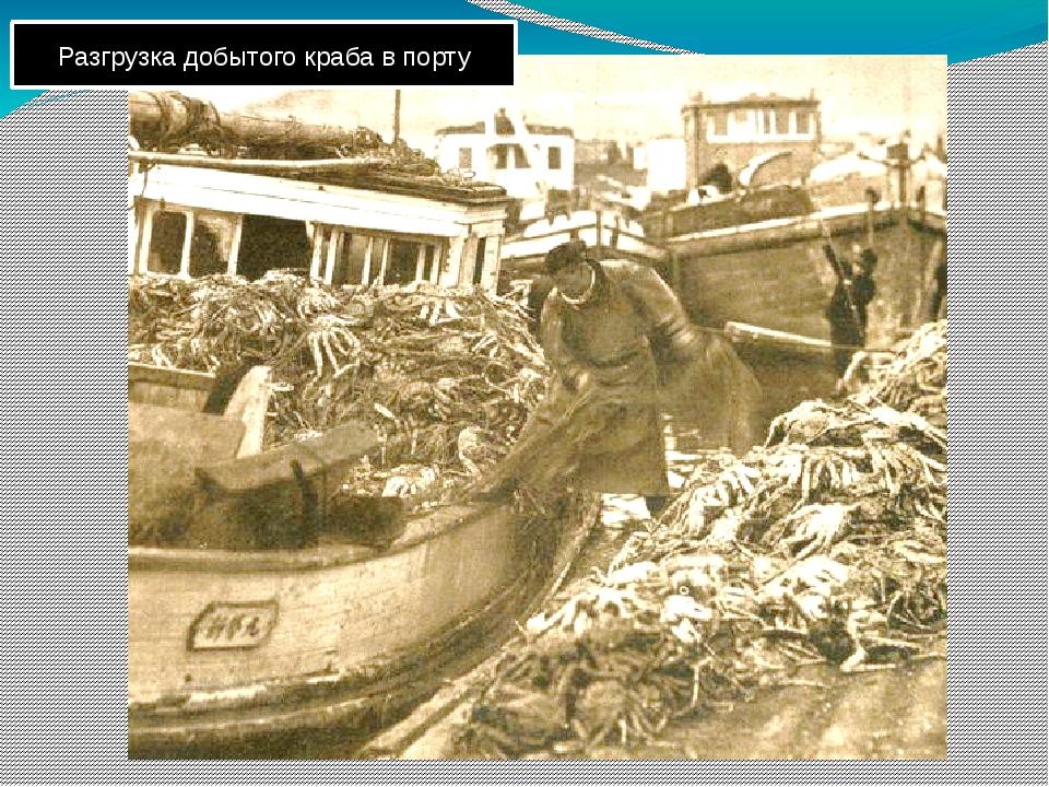 Разгрузка добытого краба в порту