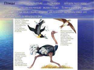 Птицы — покрытые перьями яйцекладущие наземные позвоночные животные. Температ