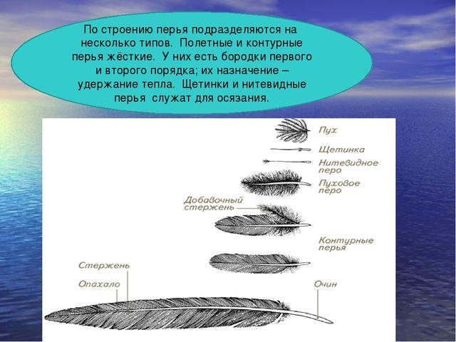 По строению перья подразделяются на несколько типов. Полетные и контурные пер...