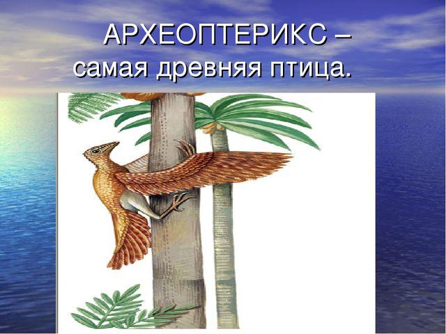 АРХЕОПТЕРИКС – самая древняя птица.