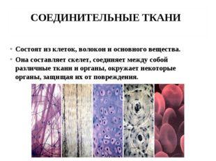 СОЕДИНИТЕЛЬНЫЕ ТКАНИ Состоят из клеток, волокон и основного вещества. Она сос