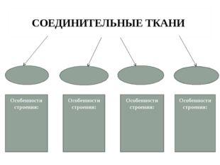 СОЕДИНИТЕЛЬНЫЕ ТКАНИ Особенности строения: Особенности строения: Особенности