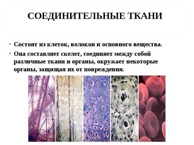 СОЕДИНИТЕЛЬНЫЕ ТКАНИ Состоят из клеток, волокон и основного вещества. Она сос...