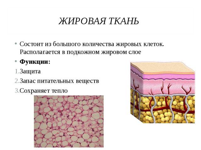 ЖИРОВАЯ ТКАНЬ Состоит из большого количества жировых клеток. Располагается в...