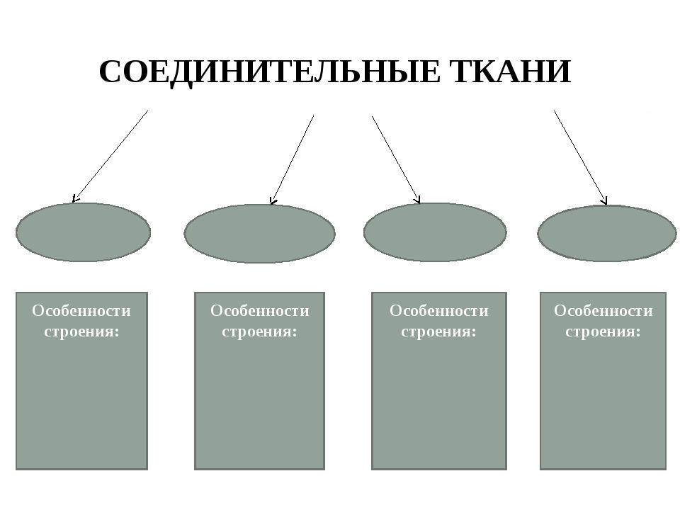 СОЕДИНИТЕЛЬНЫЕ ТКАНИ Особенности строения: Особенности строения: Особенности...