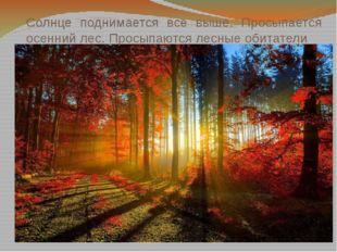 Солнце поднимается все выше. Просыпается осенний лес. Просыпаются лесные обит
