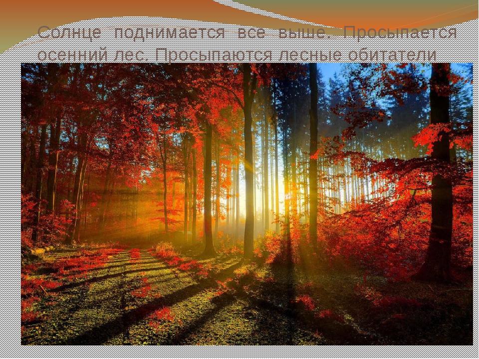 Солнце поднимается все выше. Просыпается осенний лес. Просыпаются лесные обит...