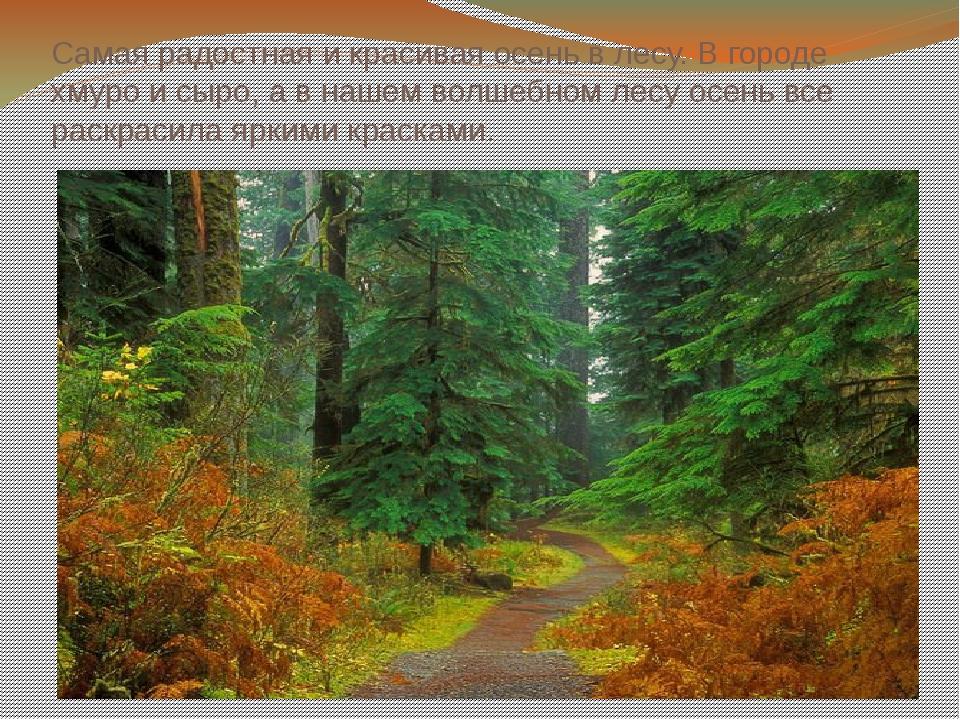 Самая радостная и красивая осень в лесу. В городе хмуро и сыро, а в нашем вол...