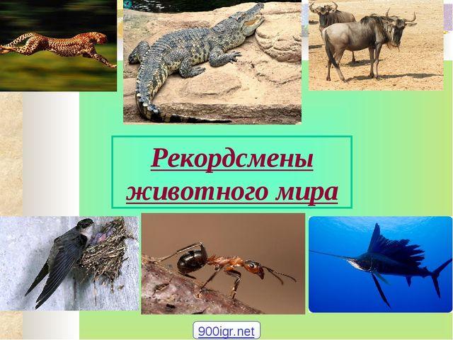 Рекордсмены животного мира 900igr.net