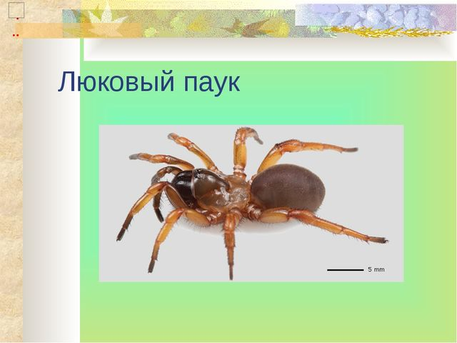Люковый паук