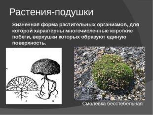 Растения-подушки жизненная форма растительных организмов, для которой характе