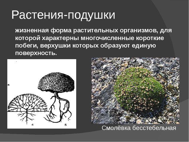 Растения-подушки жизненная форма растительных организмов, для которой характе...