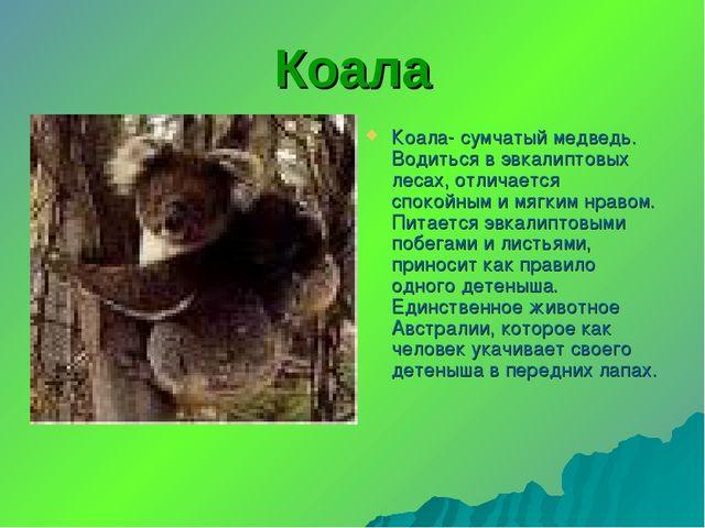 Коала Коала- сумчатый медведь. Водиться в эвкалиптовых лесах, отличается спок...