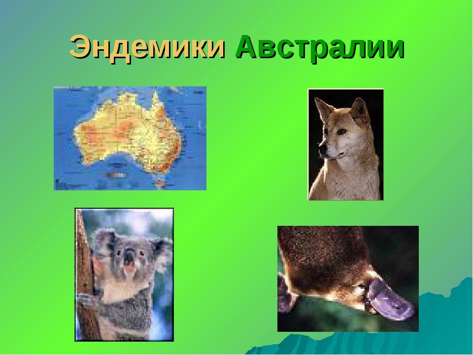 Эндемики Австралии
