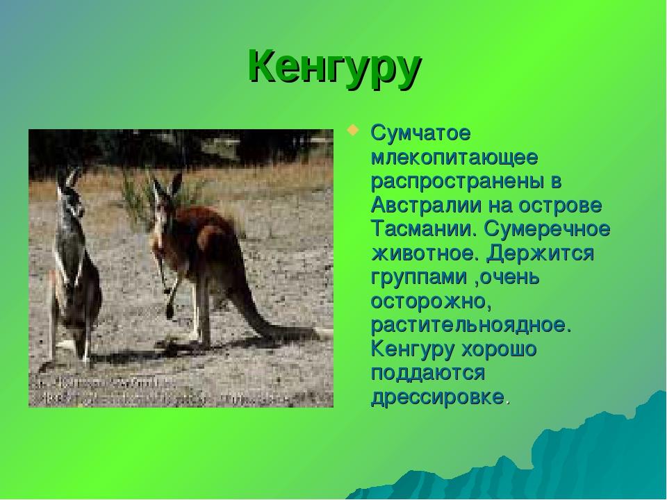 Кенгуру Сумчатое млекопитающее распространены в Австралии на острове Тасмании...